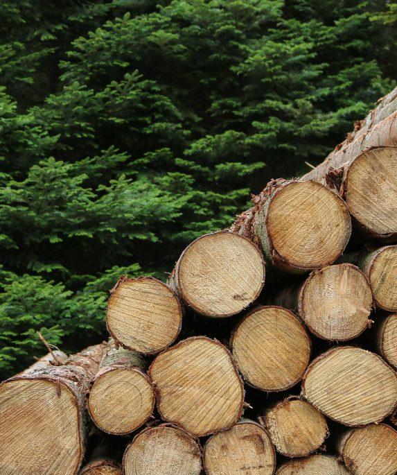 bosques-sostenibles